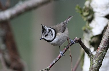 Birdwatching Holiday - NEW! Scottish Specialities in Autumn