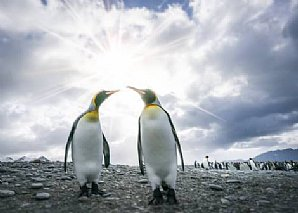 Birdwatching Holiday - NEW! Antarctic Peninsula and South Shetland Islands