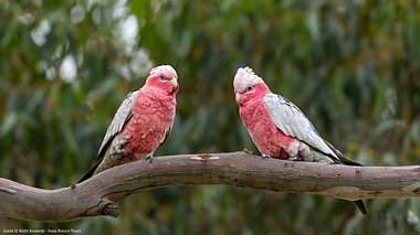Birdwatching Holiday - New! South-West Australia