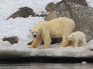 NEW! Svalbard with BBC Wildlife