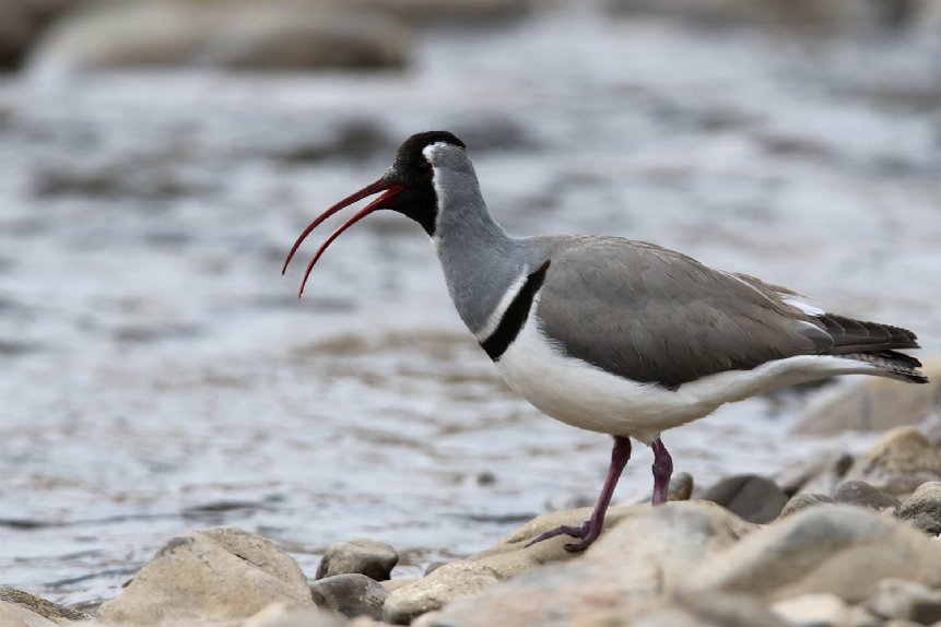 China Birding Tour