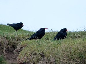 Birdwatching Holiday - NEW! West Cornwall in Autumn for birders