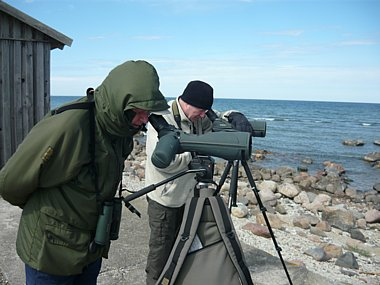 Birdwatching Holiday - NEW! Estonia short break in early spring