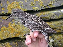 Fair Isle in Autumn for birders