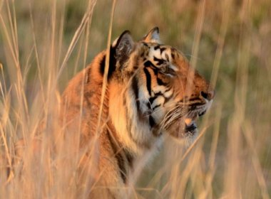Birdwatching Holiday - India - Birds, Tigers and Taj Mahal
