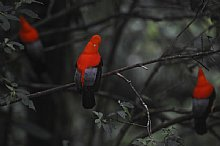 NEW! Ecuador: Birding, Wildlife and Culture