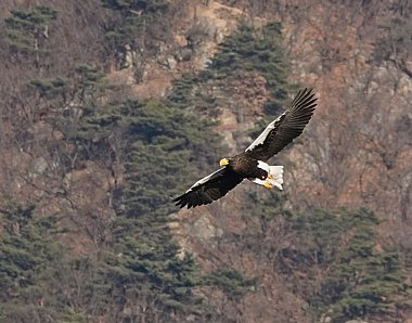 Birdwatching Holiday - NEW! South Korea